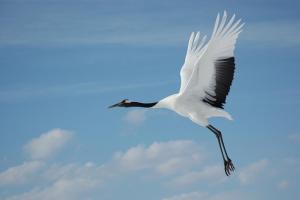 クローサ(台風10号)が意味する鶴とは?